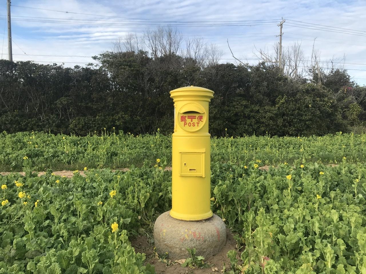 関西 菜の花 畑